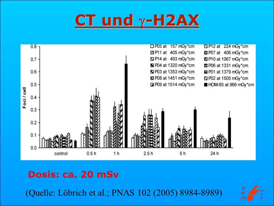 CT und -H2AX (Quelle: Löbrich et al.; PNAS 102 (2005) 8984-8989) Dosis: ca. 20 mSv