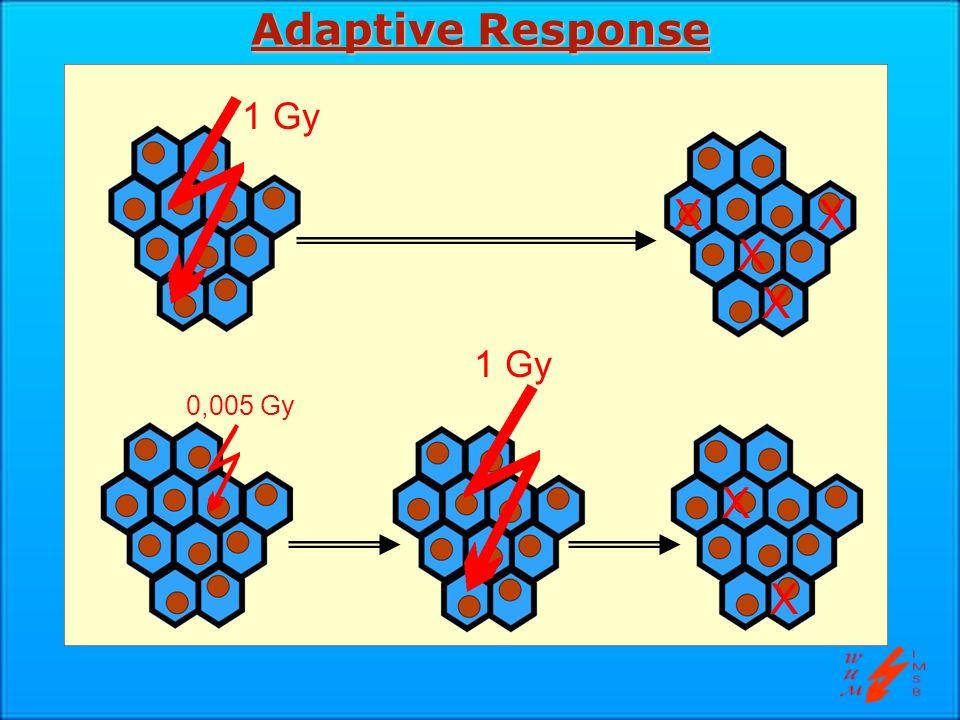 Adaptive Response (Beispiel) Kontrolle 0,05 Gy 1 Gy 0,05+1 Gy Aberrationen/1000 Zellen 100 0