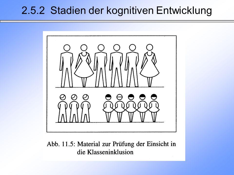 2.5.2 Stadien der kognitiven Entwicklung