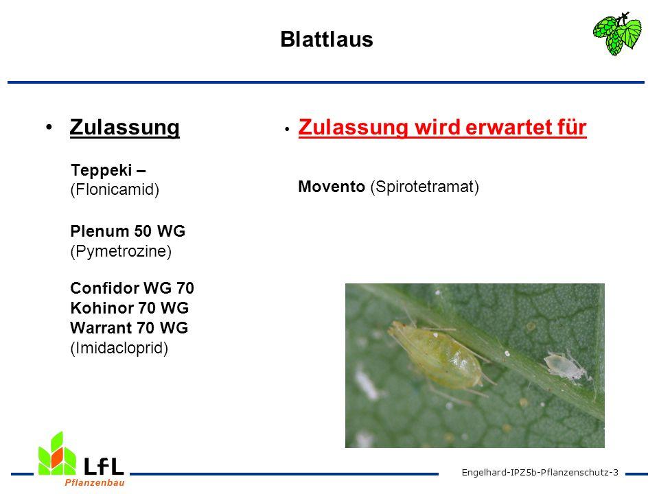 Engelhard-IPZ5b-Pflanzenschutz-3 Blattlaus Zulassung Teppeki – (Flonicamid) Plenum 50 WG (Pymetrozine) Confidor WG 70 Kohinor 70 WG Warrant 70 WG (Imi