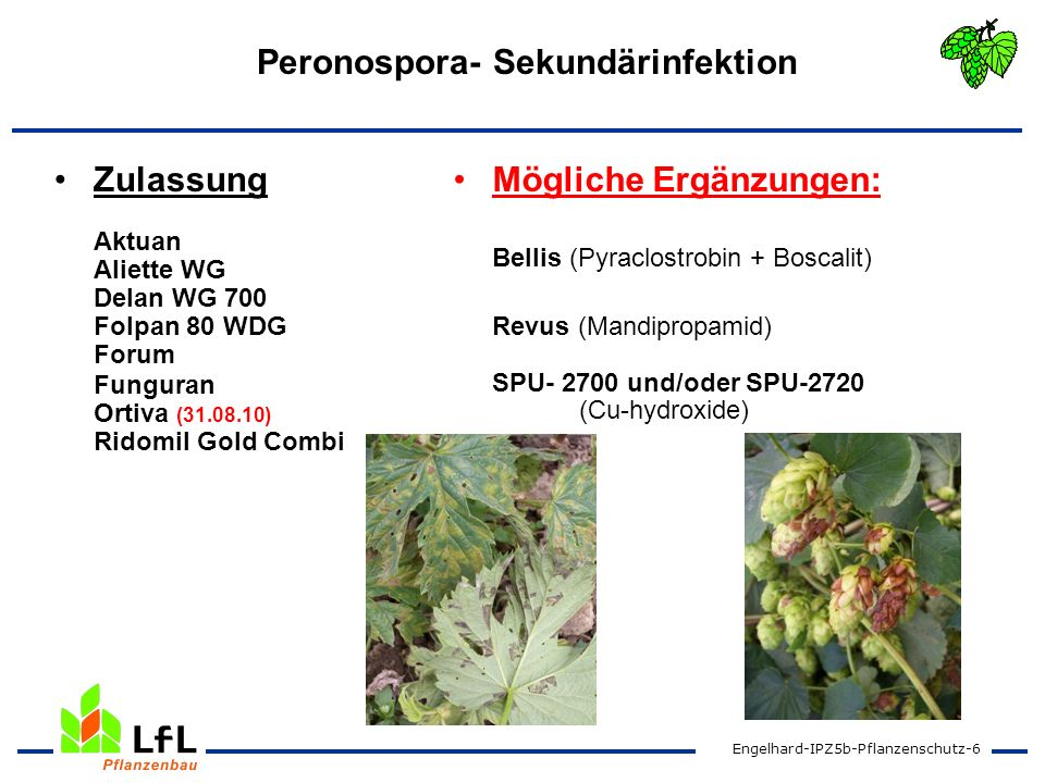 Engelhard-IPZ5b-Pflanzenschutz-7 Echter Mehltau Zulassung Bayfidan Flint Fortress 250 Systhane 20 EW Schwefelprodukte Mögliche Ergänzungen: Bellis (Boscalid + Pyraclostrobin) Stopper gesucht !!