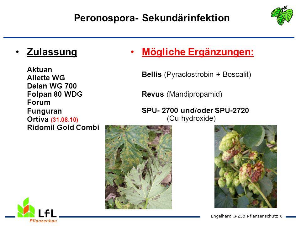 Engelhard-IPZ5b-Pflanzenschutz-6 Peronospora- Sekundärinfektion Zulassung Aktuan Aliette WG Delan WG 700 Folpan 80 WDG Forum Funguran Ortiva (31.08.10