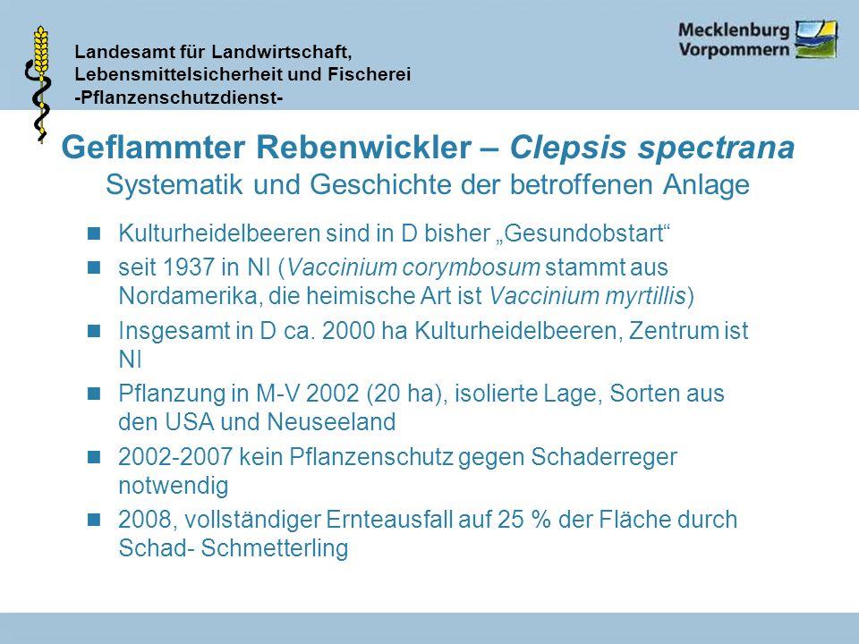 Landesamt für Landwirtschaft, Lebensmittelsicherheit und Fischerei -Pflanzenschutzdienst- Geflammter Rebenwickler – Clepsis spectrana Systematik und G
