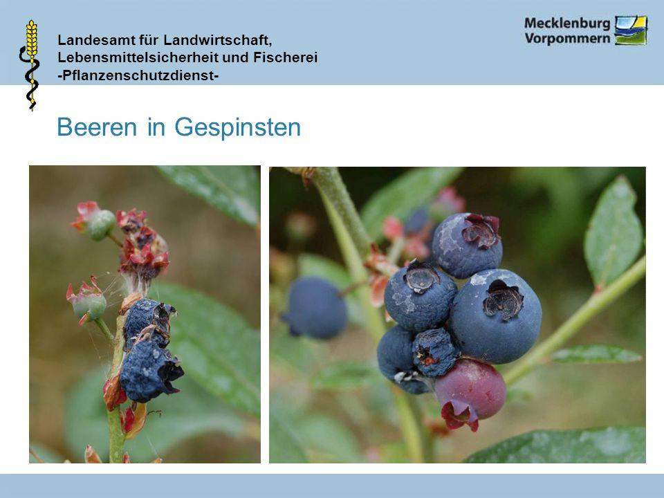 Landesamt für Landwirtschaft, Lebensmittelsicherheit und Fischerei -Pflanzenschutzdienst- Beeren in Gespinsten
