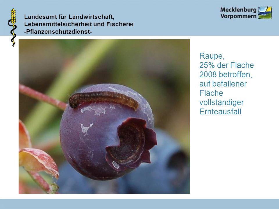 Landesamt für Landwirtschaft, Lebensmittelsicherheit und Fischerei -Pflanzenschutzdienst- Raupe, 25% der Fläche 2008 betroffen, auf befallener Fläche