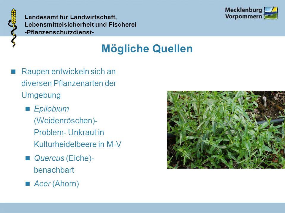 Landesamt für Landwirtschaft, Lebensmittelsicherheit und Fischerei -Pflanzenschutzdienst- Mögliche Quellen n Raupen entwickeln sich an diversen Pflanz