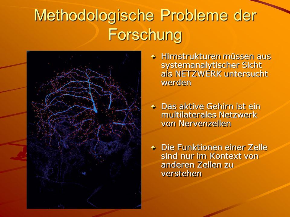 Methodologische Probleme der Forschung Hirnstrukturen müssen aus systemanalytischer Sicht als NETZWERK untersucht werden Das aktive Gehirn ist ein mul