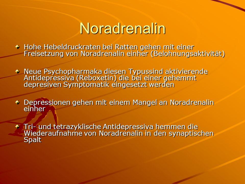 Noradrenalin Hohe Hebeldruckraten bei Ratten gehen mit einer Freisetzung von Noradrenalin einher (Belohnungsaktivität) Neue Psychopharmaka diesen Typu