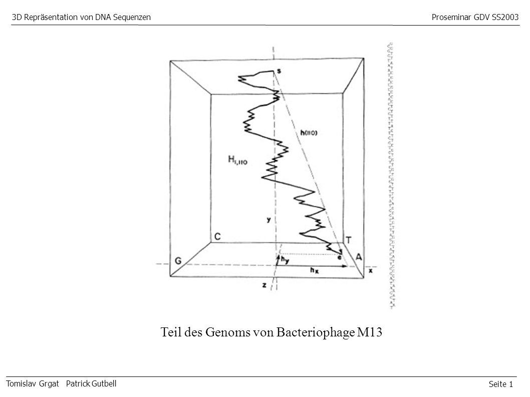 Seite 1 Tomislav Grgat Patrick Gutbell 3D Repräsentation von DNA SequenzenProseminar GDV SS2003 Teil des Genoms von Bacteriophage M13