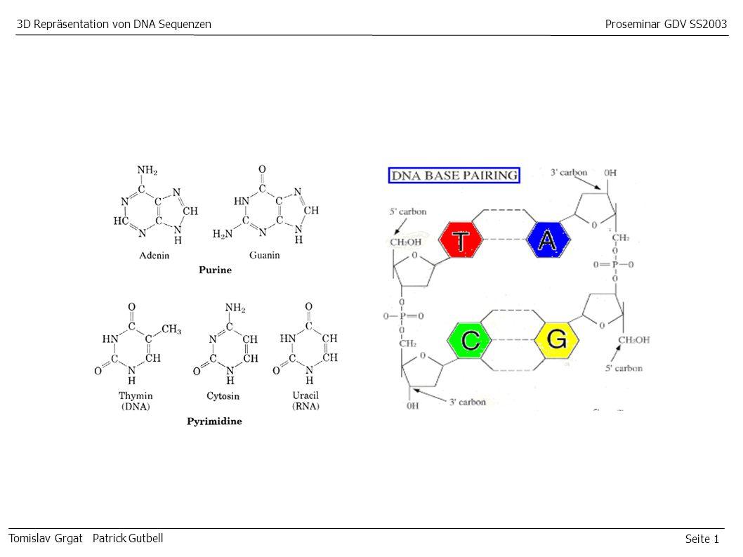 Seite 1 Tomislav Grgat Patrick Gutbell 3D Repräsentation von DNA SequenzenProseminar GDV SS2003