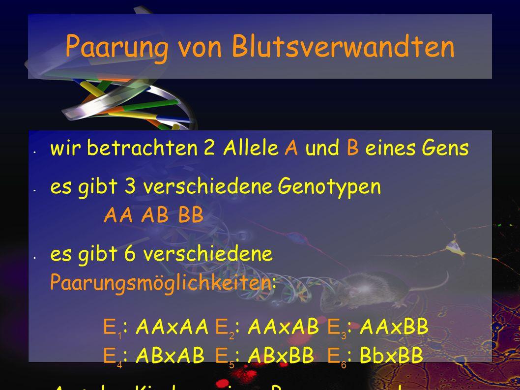 Paarung von Blutsverwandten wir betrachten 2 Allele A und B eines Gens es gibt 3 verschiedene Genotypen AAABBB es gibt 6 verschiedene Paarungsmöglichk