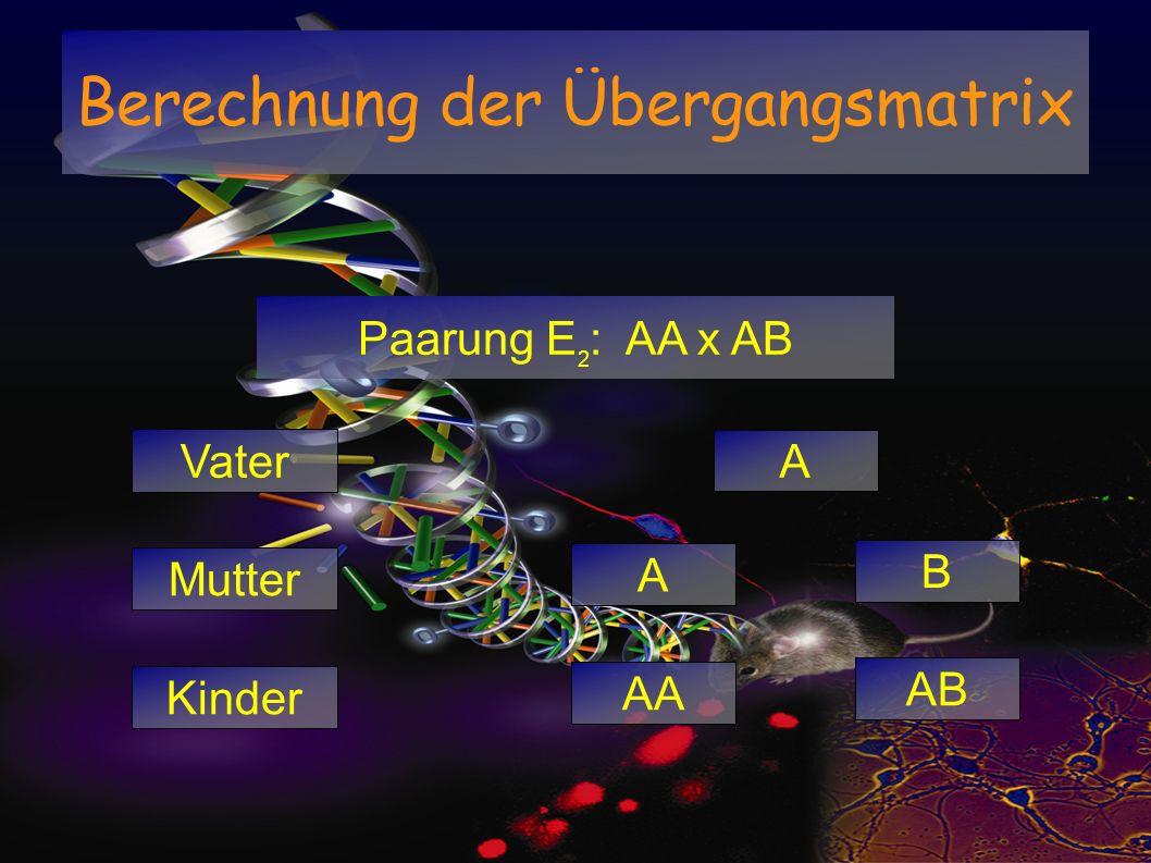 Berechnung der Übergangsmatrix Paarung E 2 : AA x AB Mutter A B Kinder AA AB Vater A