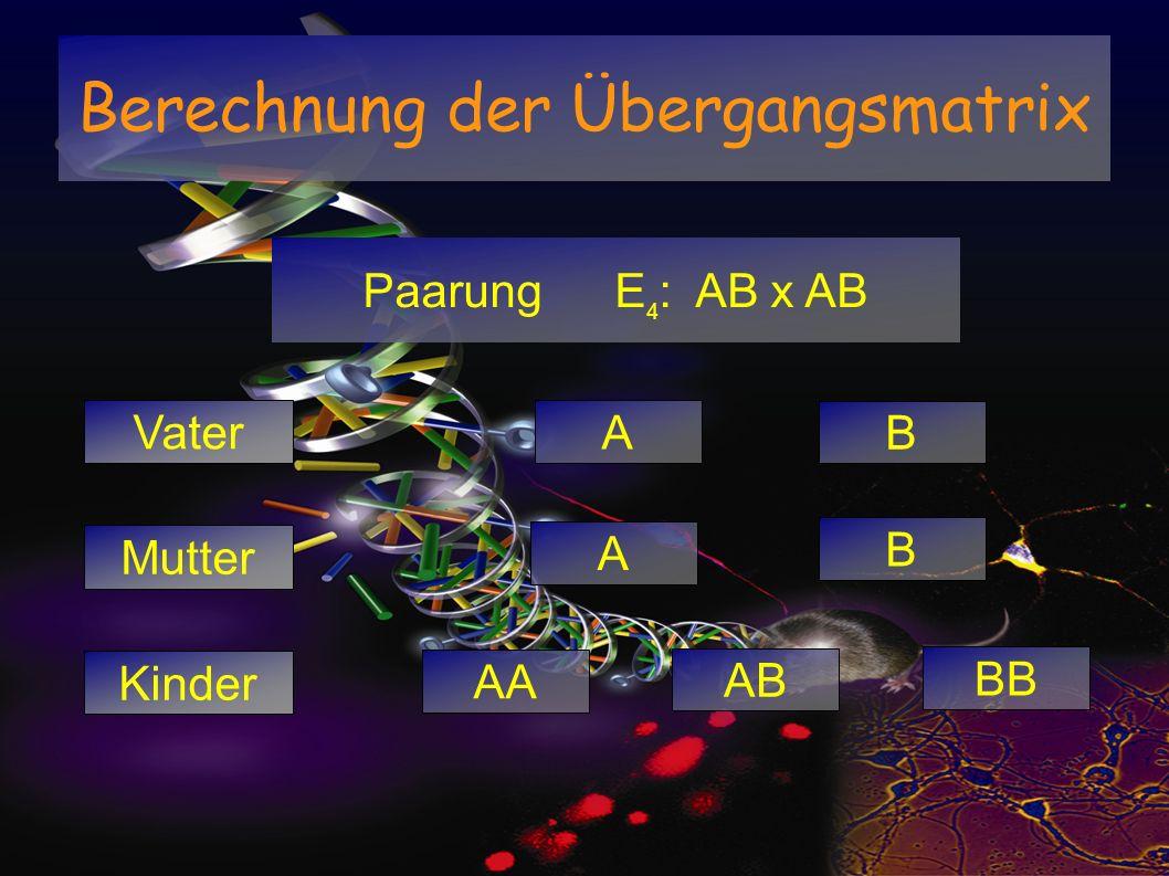 Paarung E 4 : AB x AB Vater Mutter Kinder B A B AA AB A BB Berechnung der Übergangsmatrix