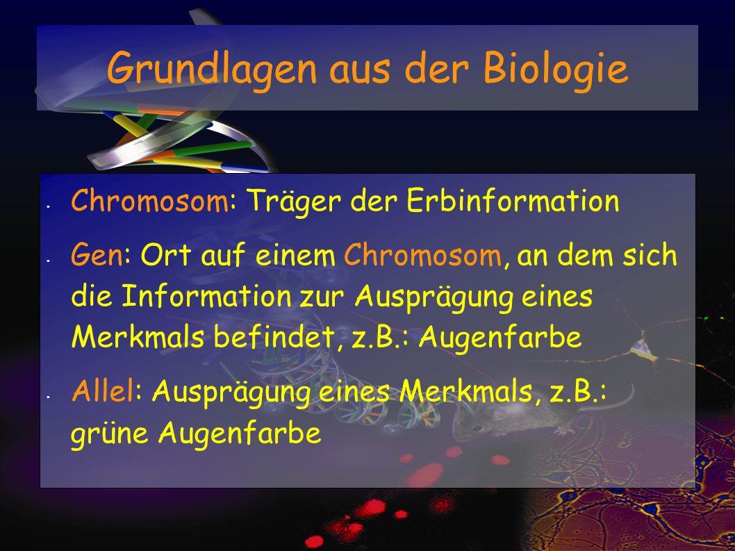 Grundlagen aus der Biologie Chromosom: Träger der Erbinformation Gen: Ort auf einem Chromosom, an dem sich die Information zur Ausprägung eines Merkma