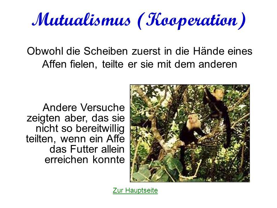 Mutualismus (Kooperation) Obwohl die Scheiben zuerst in die Hände eines Affen fielen, teilte er sie mit dem anderen Andere Versuche zeigten aber, das sie nicht so bereitwillig teilten, wenn ein Affe das Futter allein erreichen konnte Zur Hauptseite