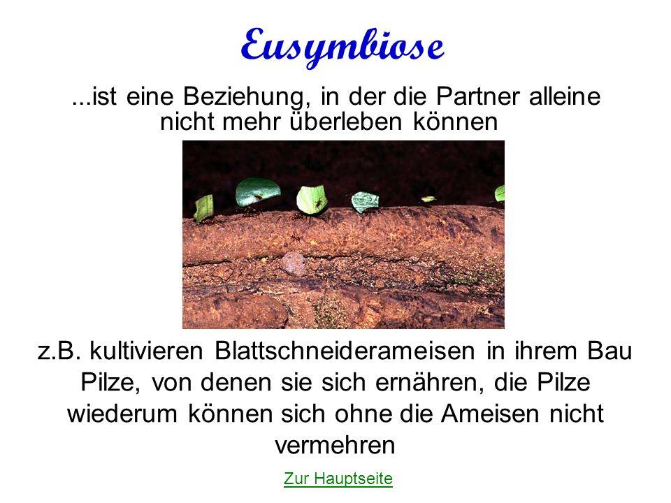 Eusymbiose...ist eine Beziehung, in der die Partner alleine nicht mehr überleben können z.B.