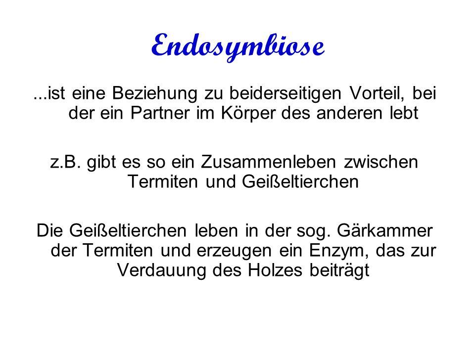 Endosymbiose...ist eine Beziehung zu beiderseitigen Vorteil, bei der ein Partner im Körper des anderen lebt z.B.