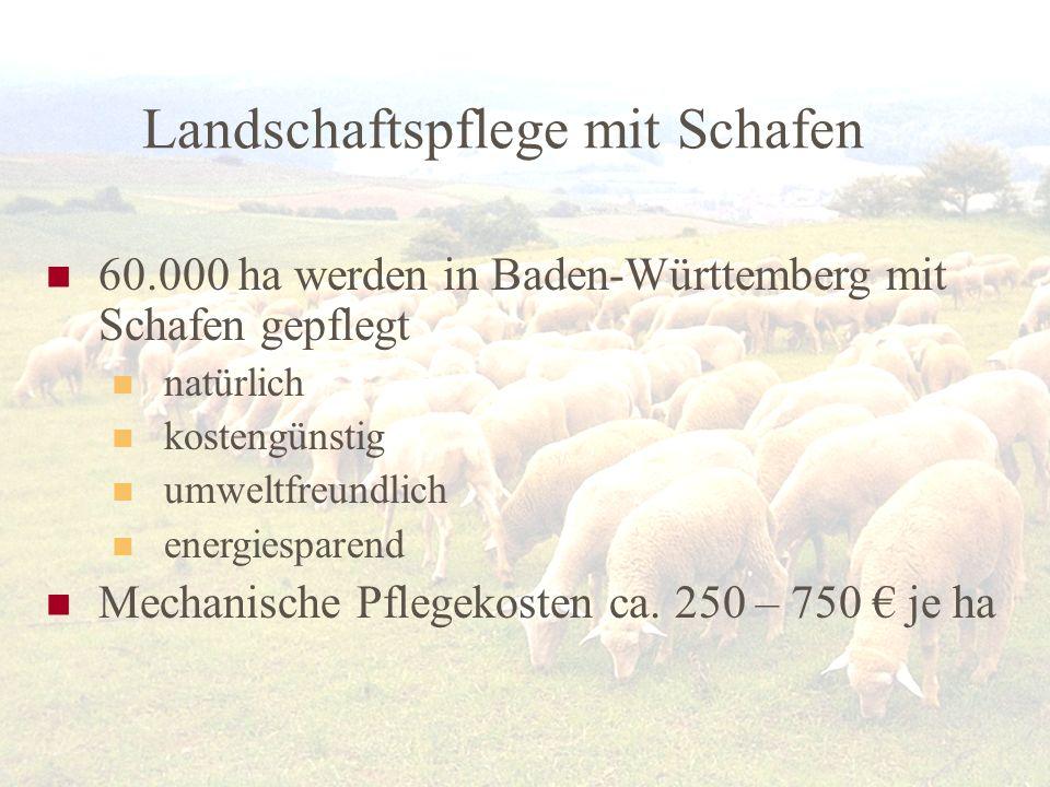 Landschaftspflege mit Schafen 60.000 ha werden in Baden-Württemberg mit Schafen gepflegt natürlich kostengünstig umweltfreundlich energiesparend Mecha