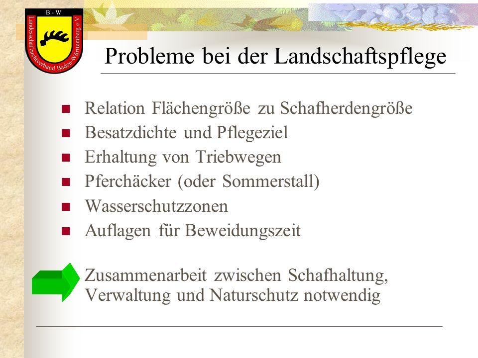 Probleme bei der Landschaftspflege Relation Flächengröße zu Schafherdengröße Besatzdichte und Pflegeziel Erhaltung von Triebwegen Pferchäcker (oder So