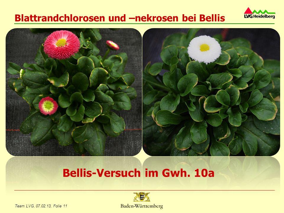 Überwinterung von Bodendeckern auf Grabflächen Rainer Koch, Infonachmittag Zierpflanzenbau, 07.02.2013