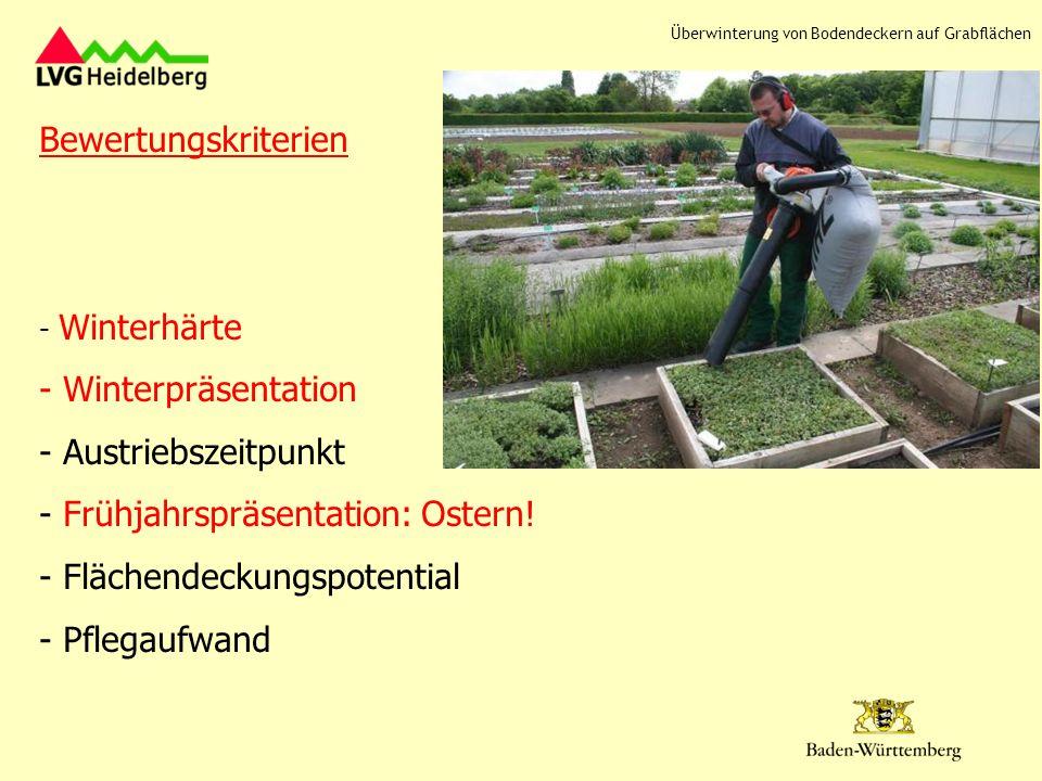 Bewertungskriterien - Winterhärte - Winterpräsentation - Austriebszeitpunkt - Frühjahrspräsentation: Ostern! - Flächendeckungspotential - Pflegaufwand