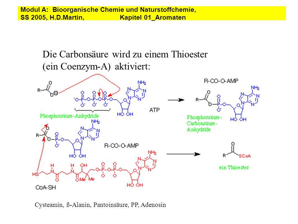 Die Carbonsäure wird zu einem Thioester (ein Coenzym-A) aktiviert: Cysteamin, ß-Alanin, Pantoinsäure, PP, Adenosin Modul A: Bioorganische Chemie und N