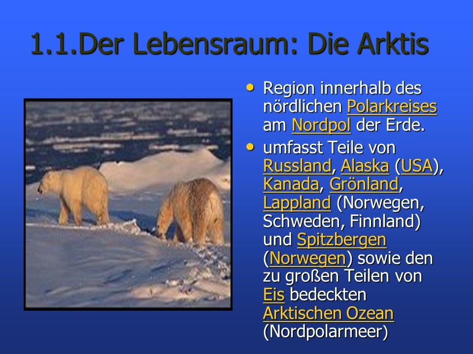 1.1.Der Lebensraum: Die Arktis Region innerhalb des nördlichen Polarkreises am Nordpol der Erde. Region innerhalb des nördlichen Polarkreises am Nordp