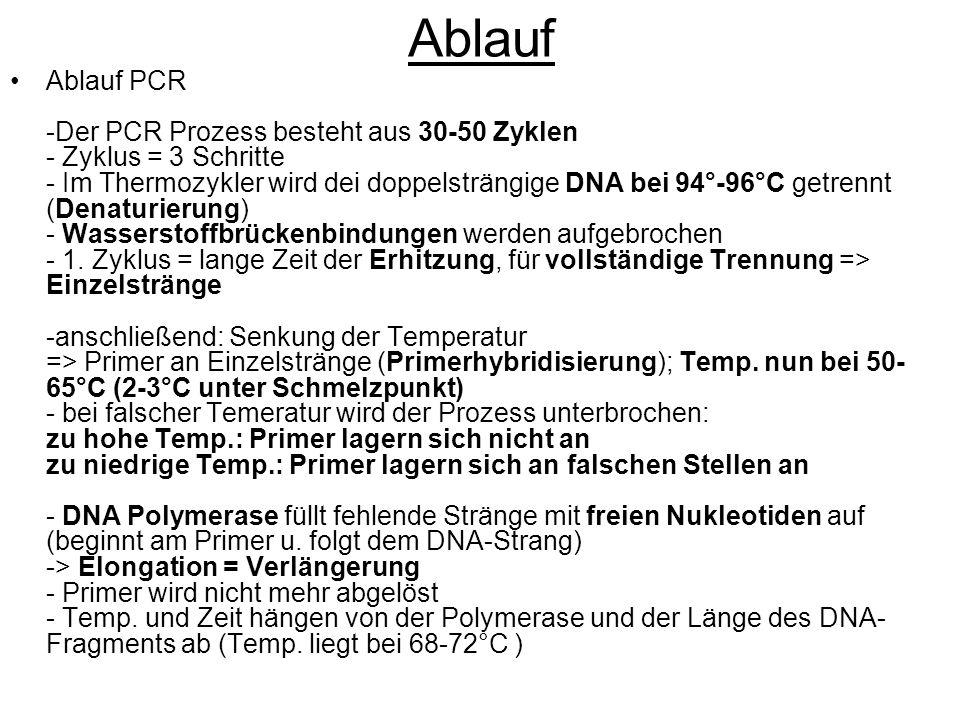 Ablauf Ablauf PCR -Der PCR Prozess besteht aus 30-50 Zyklen - Zyklus = 3 Schritte - Im Thermozykler wird dei doppelsträngige DNA bei 94°-96°C getrennt