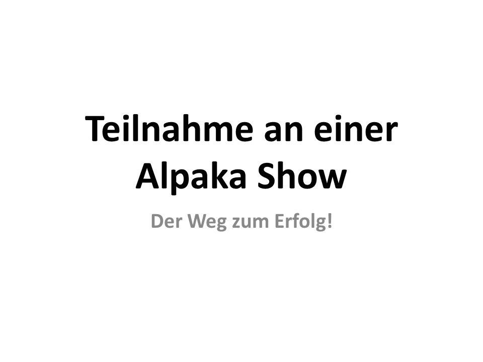 Teilnahme an einer Alpaka Show Der Weg zum Erfolg!