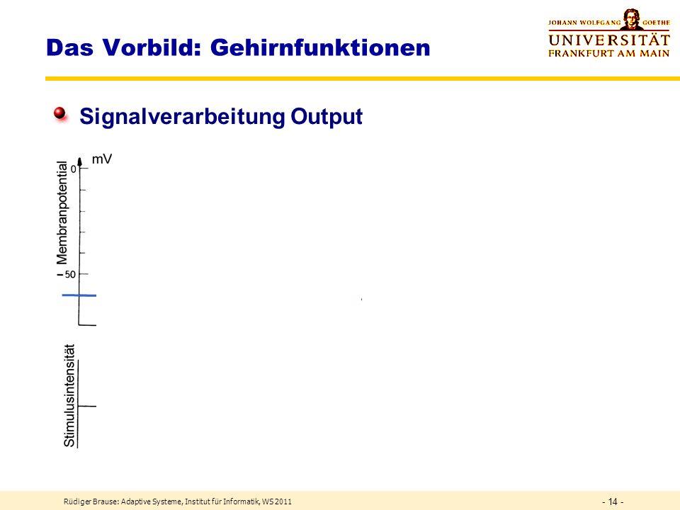 Rüdiger Brause: Adaptive Systeme, Institut für Informatik, WS 2011 - 13 - Das Vorbild: Gehirnfunktionen Pyramidalzellen