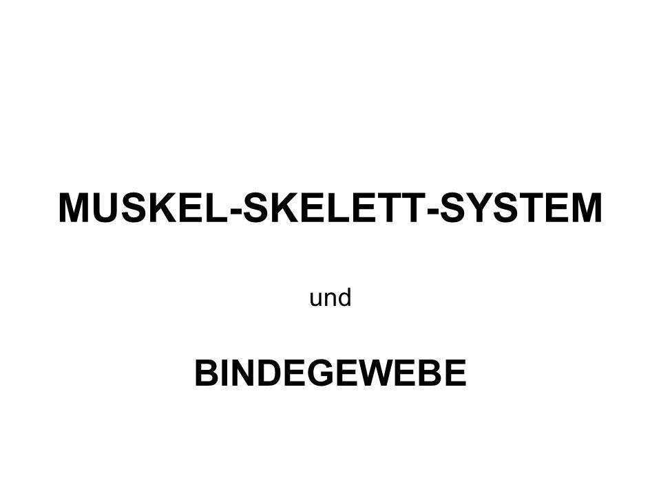 MUSKEL-SKELETT-SYSTEM und BINDEGEWEBE