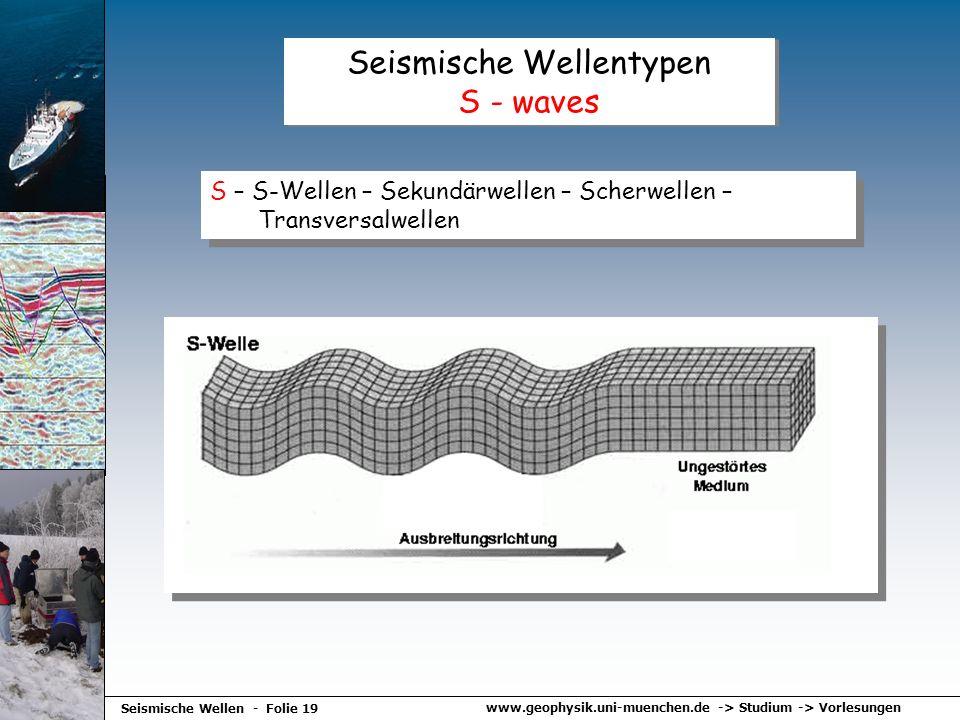 www.geophysik.uni-muenchen.de -> Studium -> Vorlesungen Seismische Wellen - Folie 19 Seismische Wellentypen S - waves S – S-Wellen – Sekundärwellen –