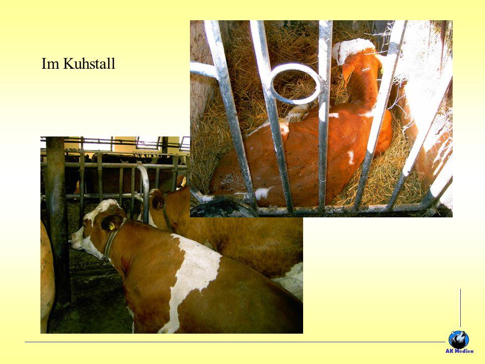 Da passt eine Menge Milch rein!!! Das Melkzeug liegt für das Melken am Morgen und Abend bereit In der Milchkammer muss immer höchste Sauberkeit herrsc