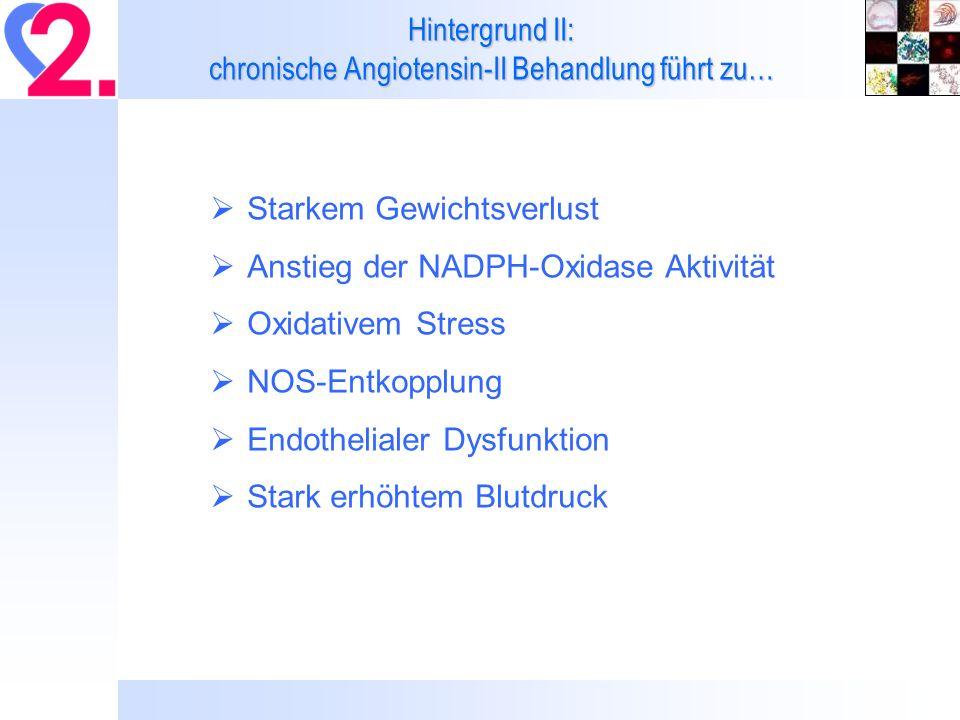 Hintergrund II: chronische Angiotensin-II Behandlung führt zu… Starkem Gewichtsverlust Anstieg der NADPH-Oxidase Aktivität Oxidativem Stress NOS-Entko