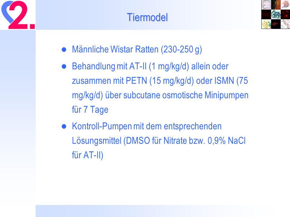 Tiermodel Männliche Wistar Ratten (230-250 g) Behandlung mit AT-II (1 mg/kg/d) allein oder zusammen mit PETN (15 mg/kg/d) oder ISMN (75 mg/kg/d) über