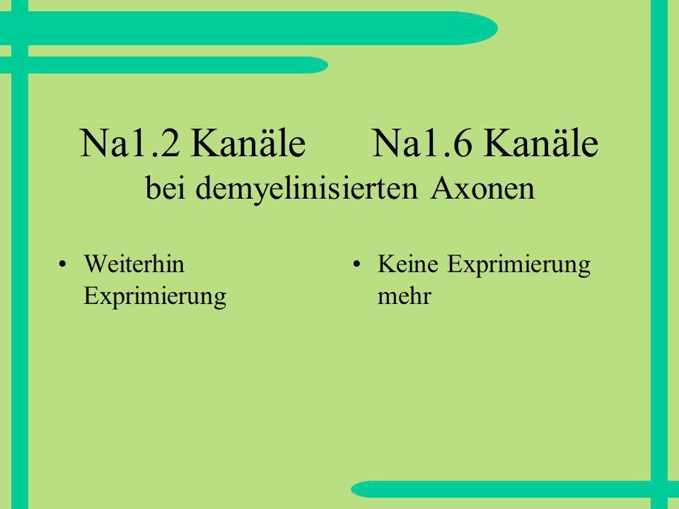 Na1.2 Kanäle Na1.6 Kanäle bei demyelinisierten Axonen Weiterhin Exprimierung Keine Exprimierung mehr