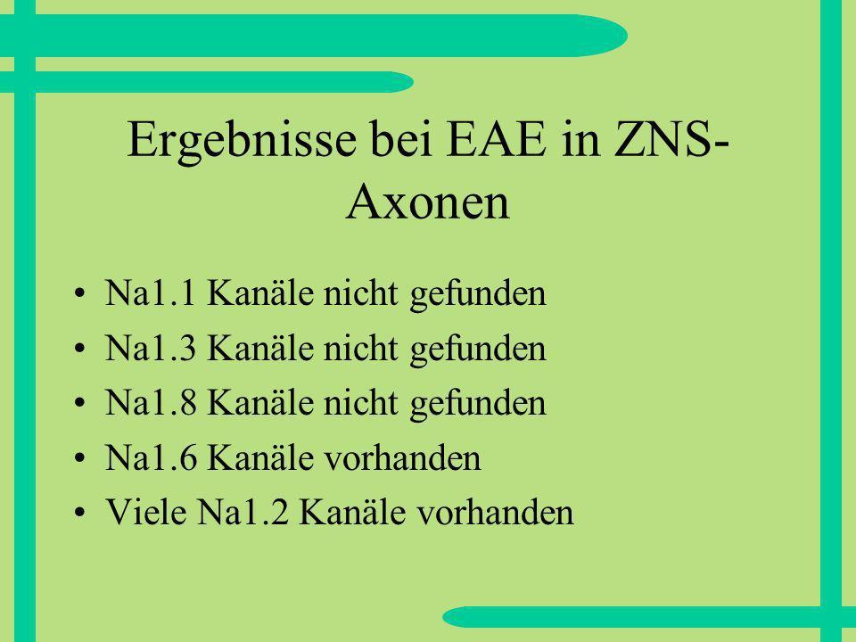 Ergebnisse bei EAE in ZNS- Axonen Na1.1 Kanäle nicht gefunden Na1.3 Kanäle nicht gefunden Na1.8 Kanäle nicht gefunden Na1.6 Kanäle vorhanden Viele Na1