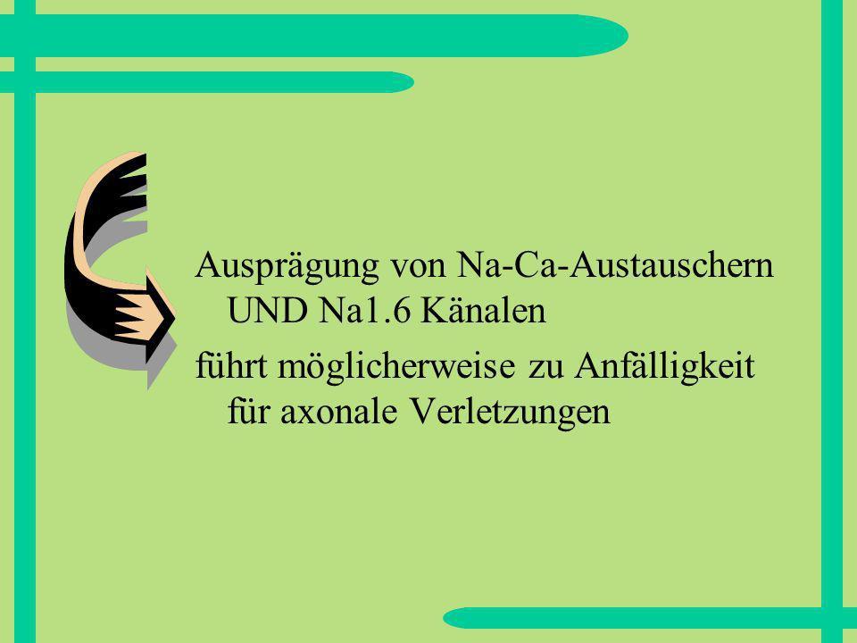 Ausprägung von Na-Ca-Austauschern UND Na1.6 Känalen führt möglicherweise zu Anfälligkeit für axonale Verletzungen