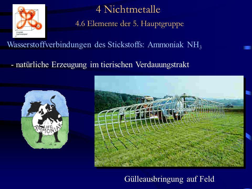 4 Nichtmetalle 4.6 Elemente der 5. Hauptgruppe Wasserstoffverbindungen des Stickstoffs: Ammoniak NH 3 - natürliche Erzeugung im tierischen Verdauungst