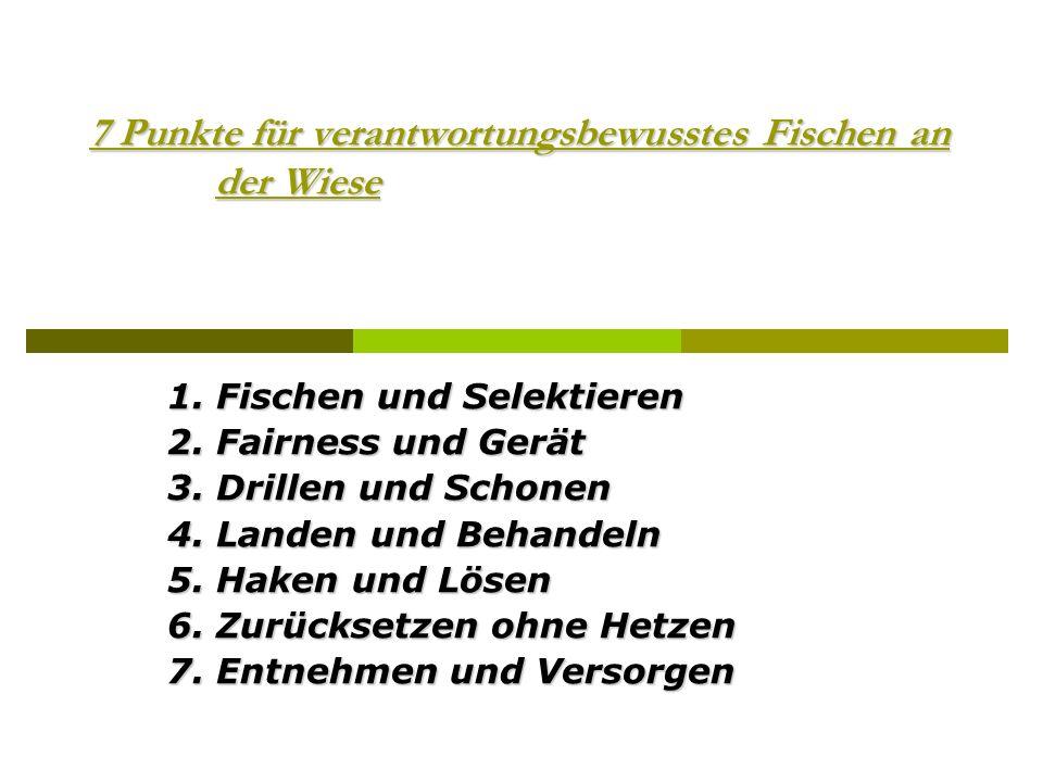 7 Punkte für verantwortungsbewusstes Fischen an der Wiese 1. Fischen und Selektieren 2. Fairness und Gerät 3. Drillen und Schonen 4. Landen und Behand