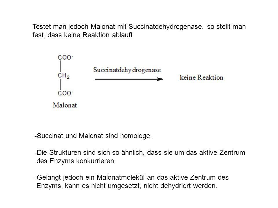 Testet man jedoch Malonat mit Succinatdehydrogenase, so stellt man fest, dass keine Reaktion abläuft. -Succinat und Malonat sind homologe. -Die Strukt