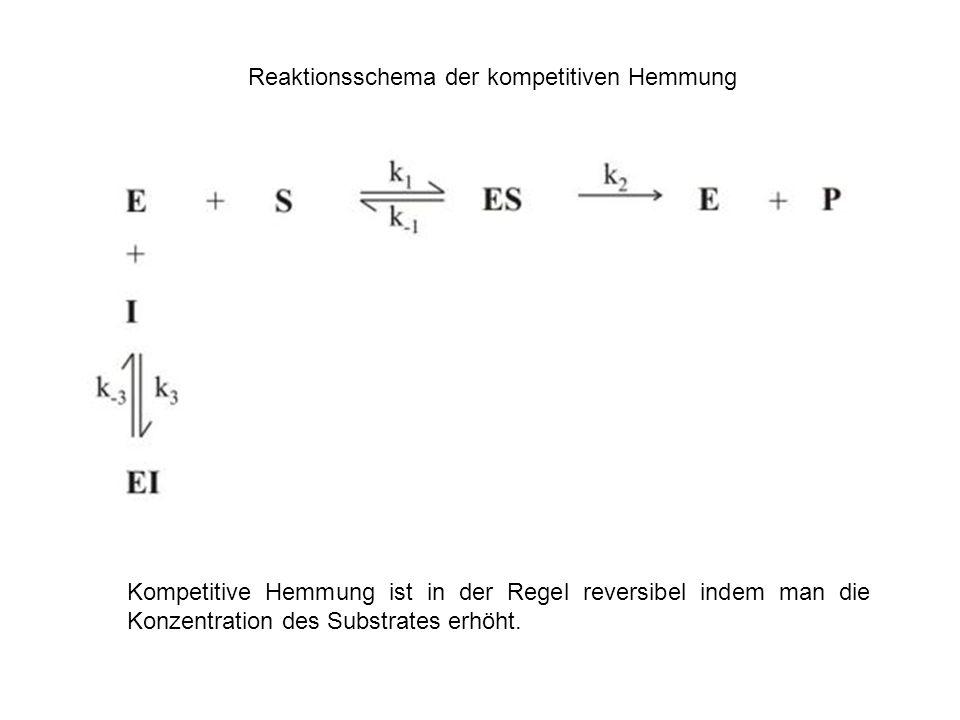 Reaktionsschema der kompetitiven Hemmung Kompetitive Hemmung ist in der Regel reversibel indem man die Konzentration des Substrates erhöht.