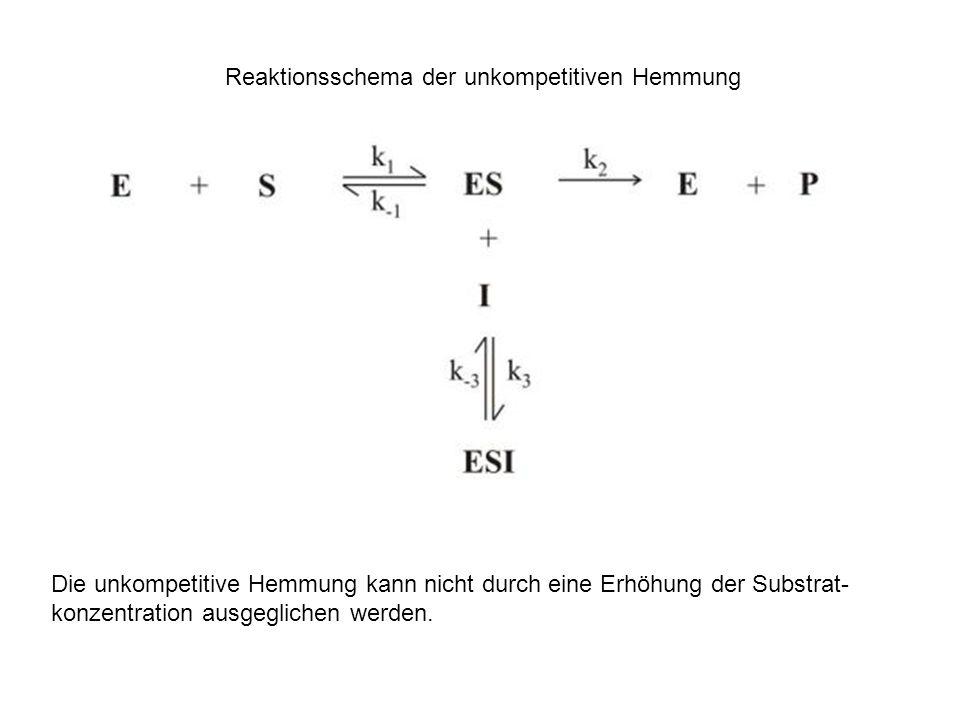 Reaktionsschema der unkompetitiven Hemmung Die unkompetitive Hemmung kann nicht durch eine Erhöhung der Substrat- konzentration ausgeglichen werden.