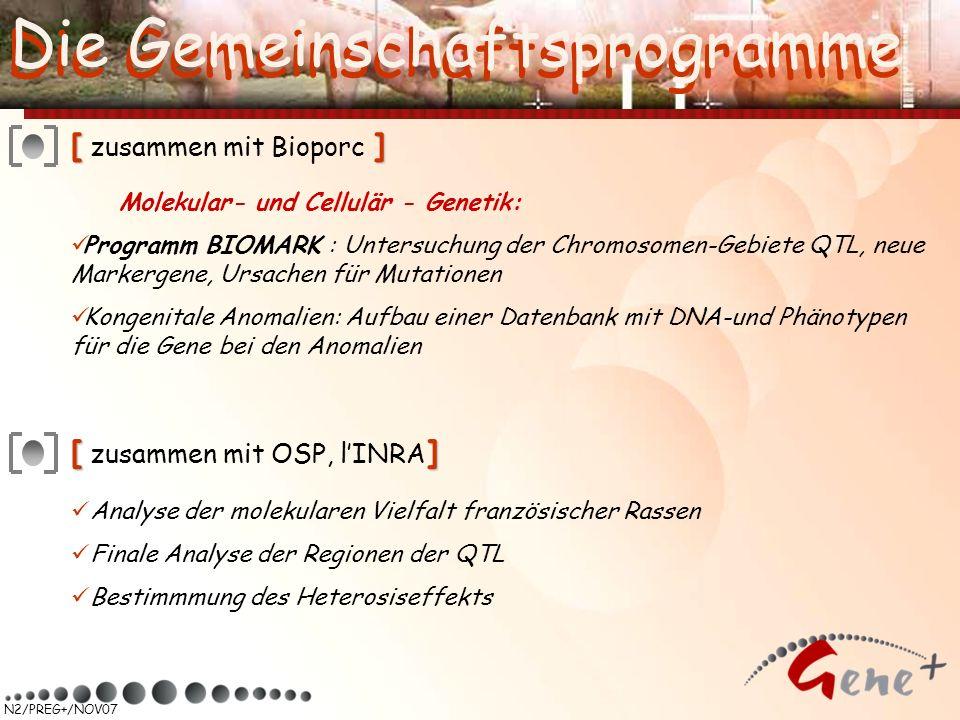 N2/PREG+/NOV07 [] [ zusammen mit Bioporc ] Molekular- und Cellulär - Genetik: Programm BIOMARK : Untersuchung der Chromosomen-Gebiete QTL, neue Marker