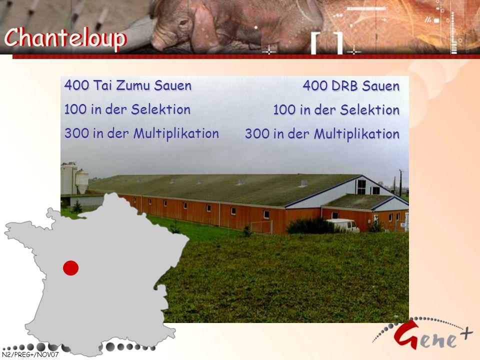 N2/PREG+/NOV07 400 Tai Zumu Sauen 100 in der Selektion 300 in der Multiplikation 400 DRB Sauen 100 in der Selektion 300 in der Multiplikation Chantelo