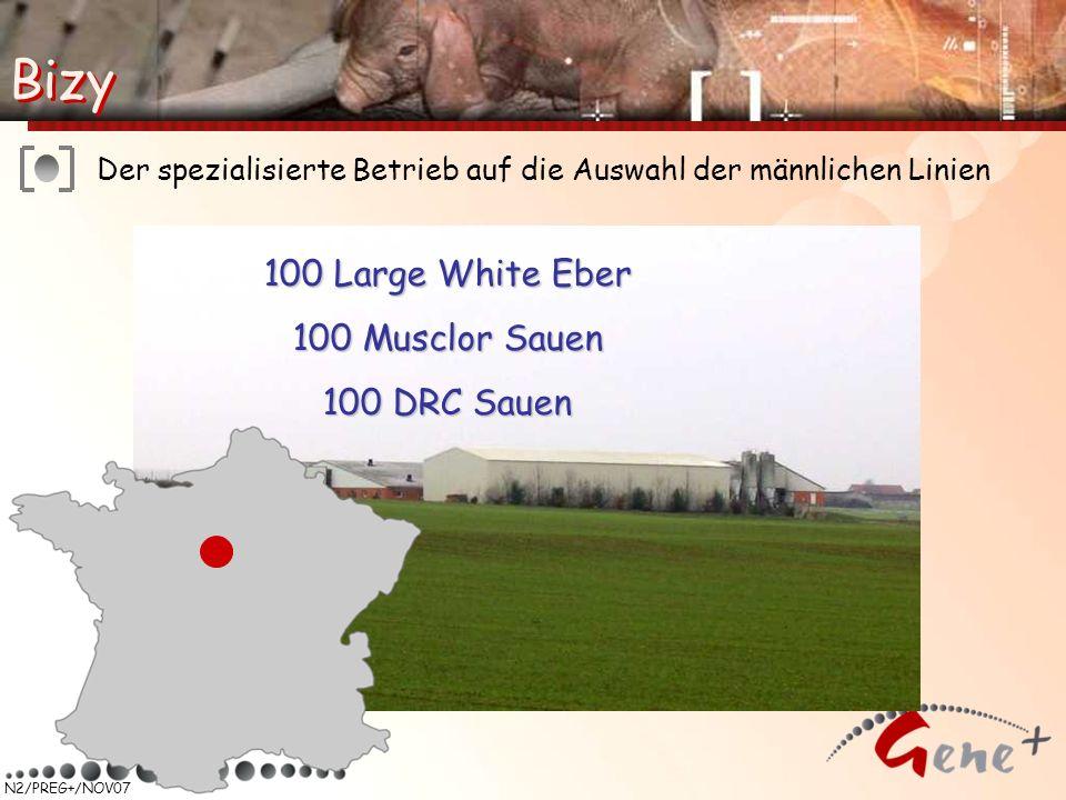 N2/PREG+/NOV07 100 Large White Eber 100 Musclor Sauen 100 DRC Sauen Der spezialisierte Betrieb auf die Auswahl der männlichen Linien Bizy