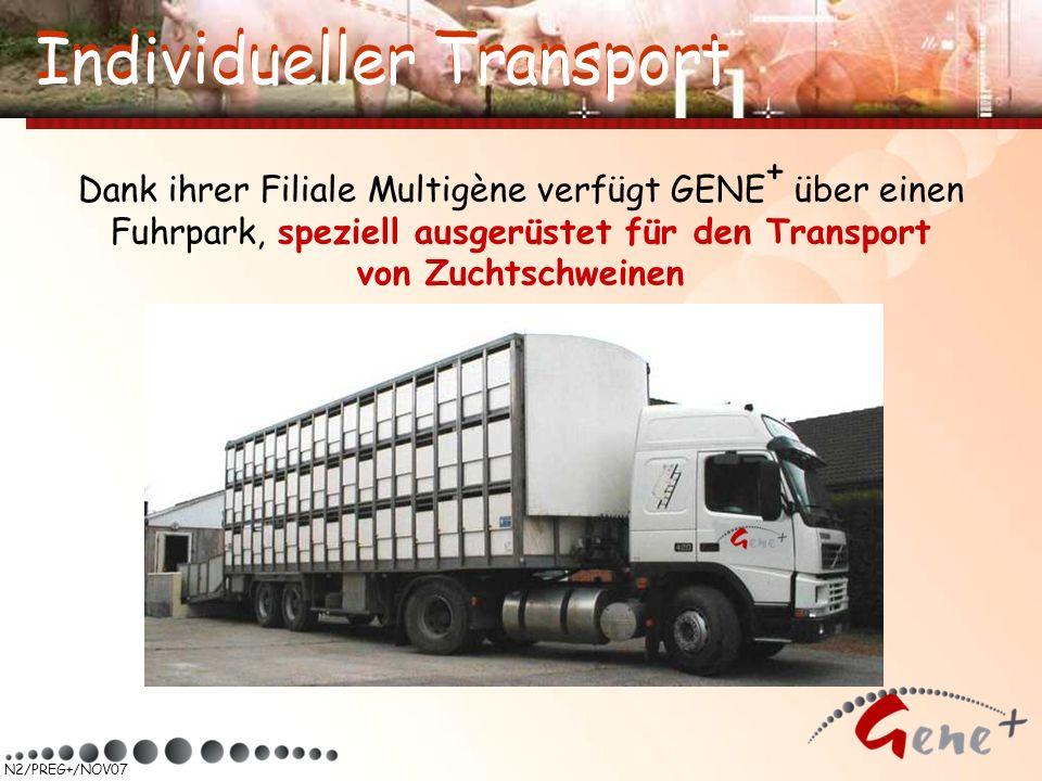 N2/PREG+/NOV07 Dank ihrer Filiale Multigène verfügt GENE + über einen Fuhrpark, speziell ausgerüstet für den Transport von Zuchtschweinen Individuelle