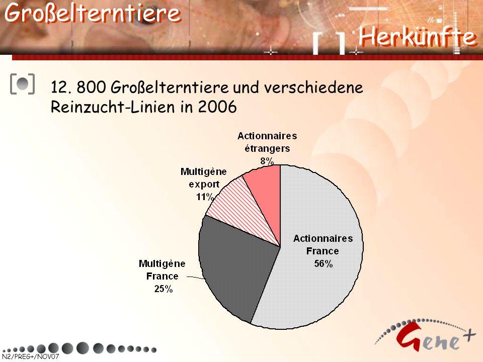 N2/PREG+/NOV07 12. 800 Großelterntiere und verschiedene Reinzucht-Linien in 2006 Herkünfte Großelterntiere Herkünfte Großelterntiere