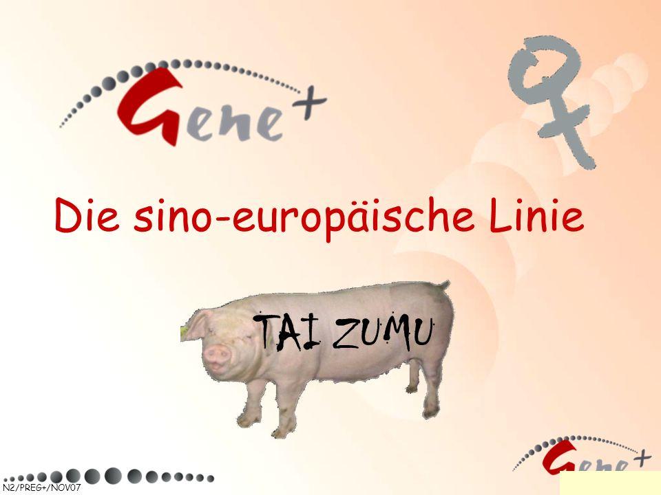 N2/PREG+/NOV07 Die sino-europäische Linie TAI ZUMU