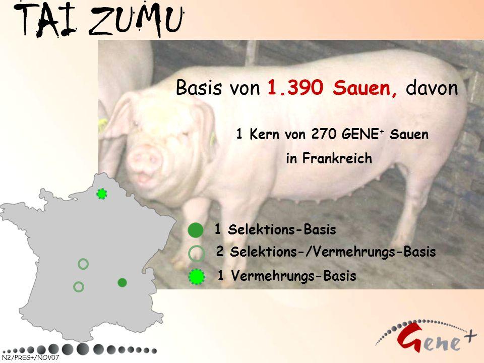 N2/PREG+/NOV07 TAI ZUMU 1 Selektions-Basis 2 Selektions-/Vermehrungs-Basis Basis von 1.390 Sauen, davon 1 Kern von 270 GENE + Sauen in Frankreich 1 Ve